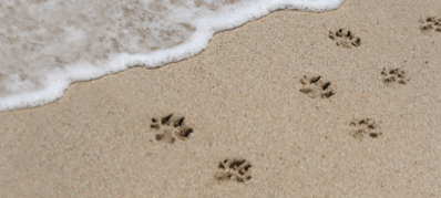 pawprints-in-sand